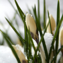 Qigong für Frauen – Frühlingsseminar am 19.März