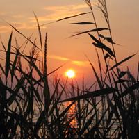 Der Sommer geht zu Ende – die Qigong Kurse beginnen