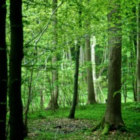 Das Qi der Bäume